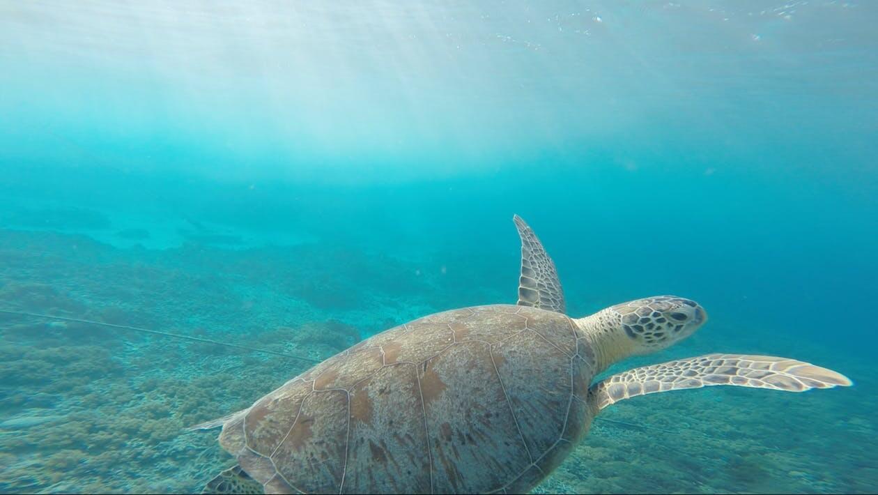 Som introvert er du mere skildpadde end hare